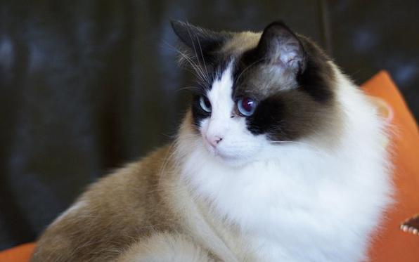 cat_max_0