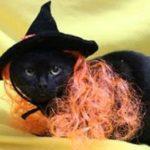 cat_orange_hair