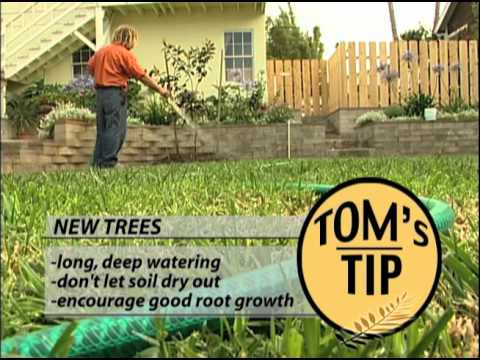 Clay Pot Gardens, How To Prune, and Planting a Tree