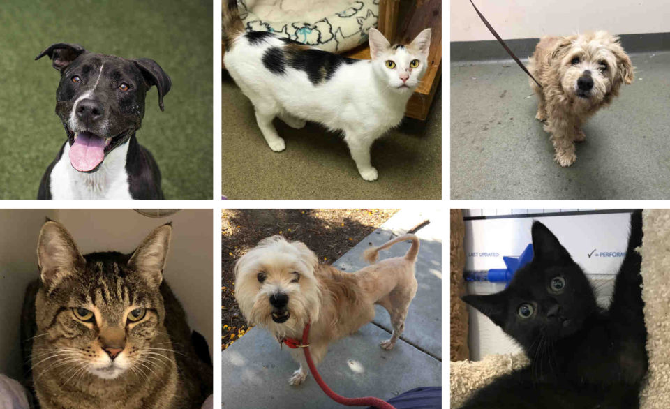 Three cats and three dogs that are available for adoption at the County Animal Shelter.