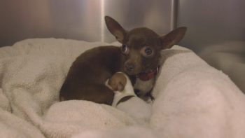 County Animal Services to the Rescue in Fire Zone