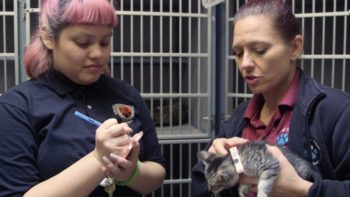 County Animal Shelter Interns Earn Class Credit