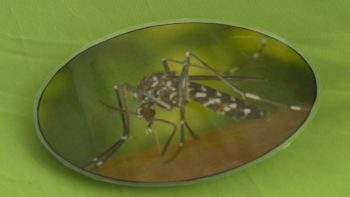 County: Mosquito Fight is West Nile Virus, Zika Fight