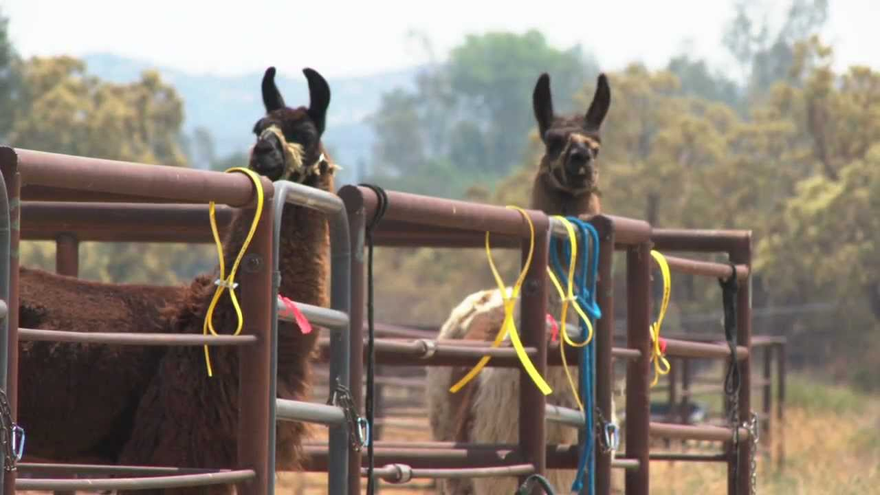 County Rescuing Animals Threatened by Fires