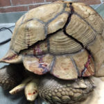 cracked_tortoise