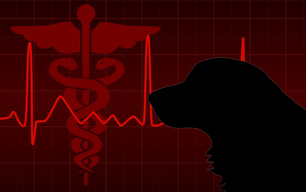 dog-medical-graphic