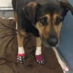 dog_bandages_paws