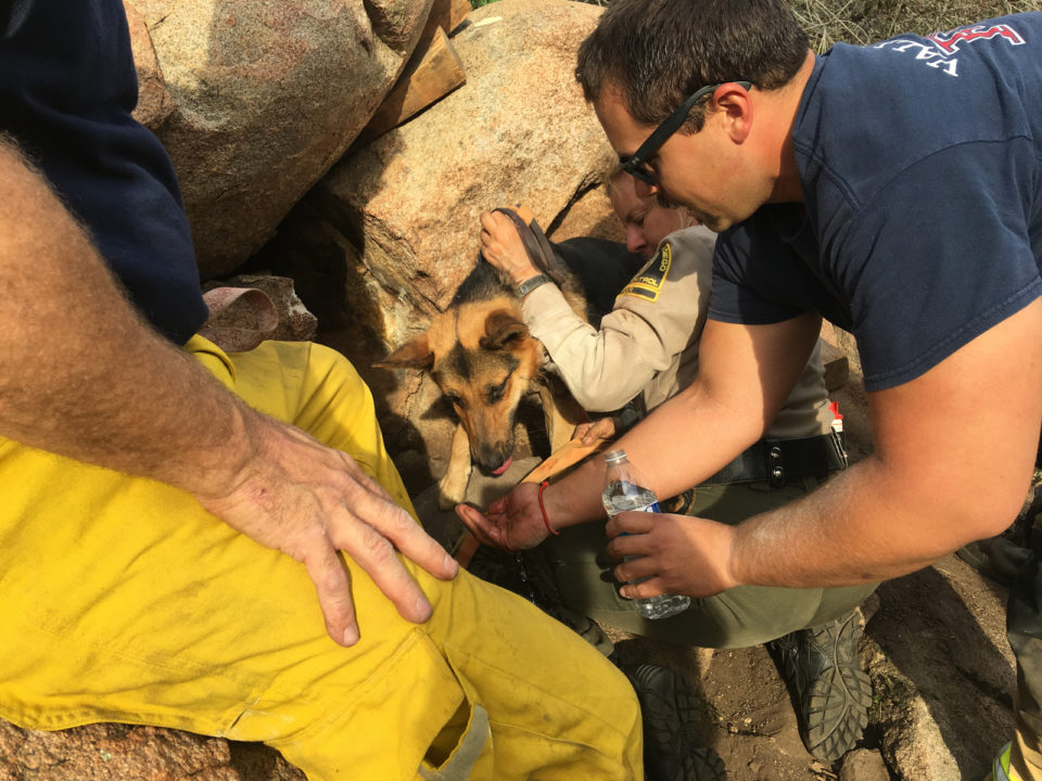 Dog rescued in Valley Center
