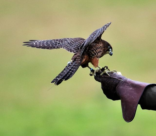 wildlife presentation Presentation at greyhawk landing, bradenton fl on june 9 2018.
