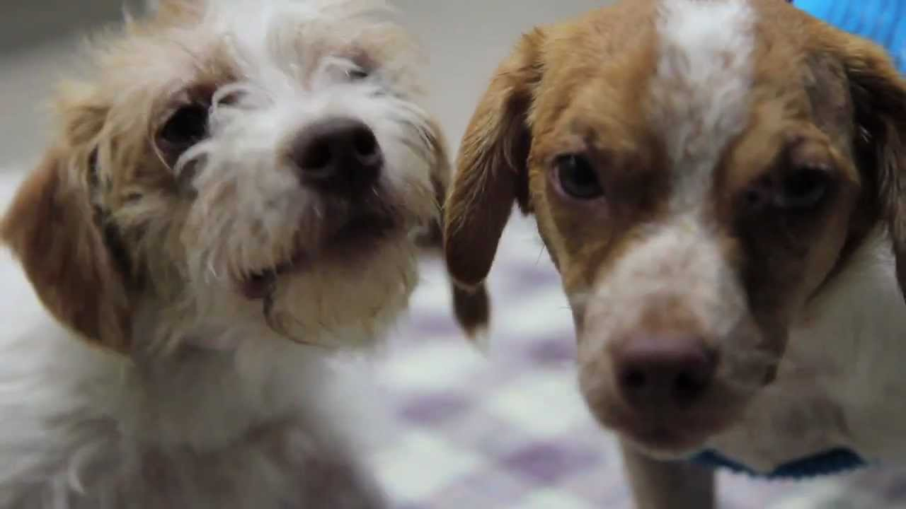 Fallbrook Puppies Fight For Their Lives