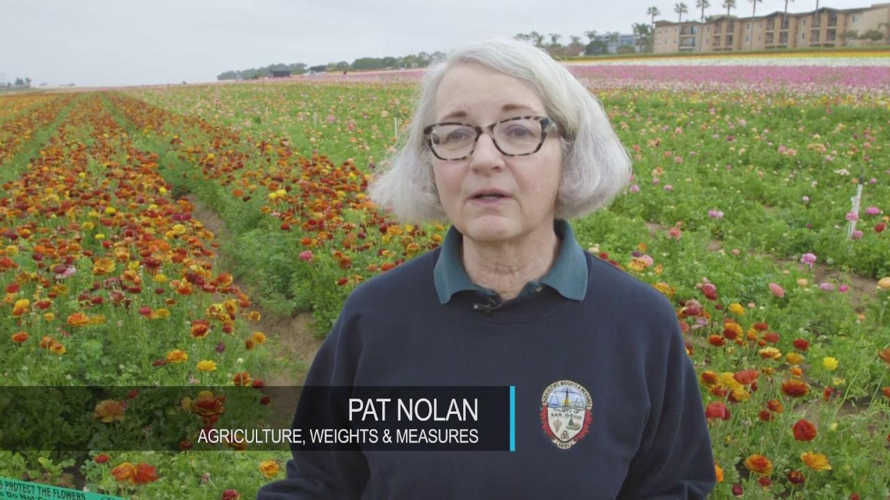 Finding Pests: Inspectors Keep Flower Fields Looking Good