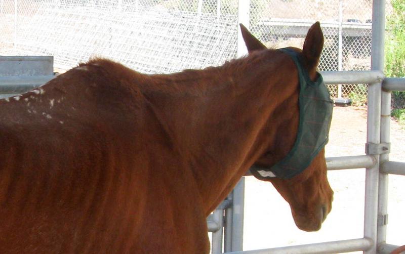horse_neglected_tirnanog