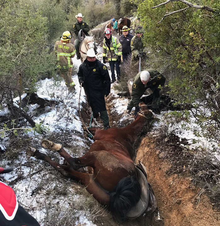 A horse rescued from a ravine suffered only minor scratches.