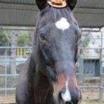 horse_tinyhat