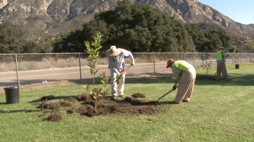 Inmates Plant Seeds of Hope at County Park