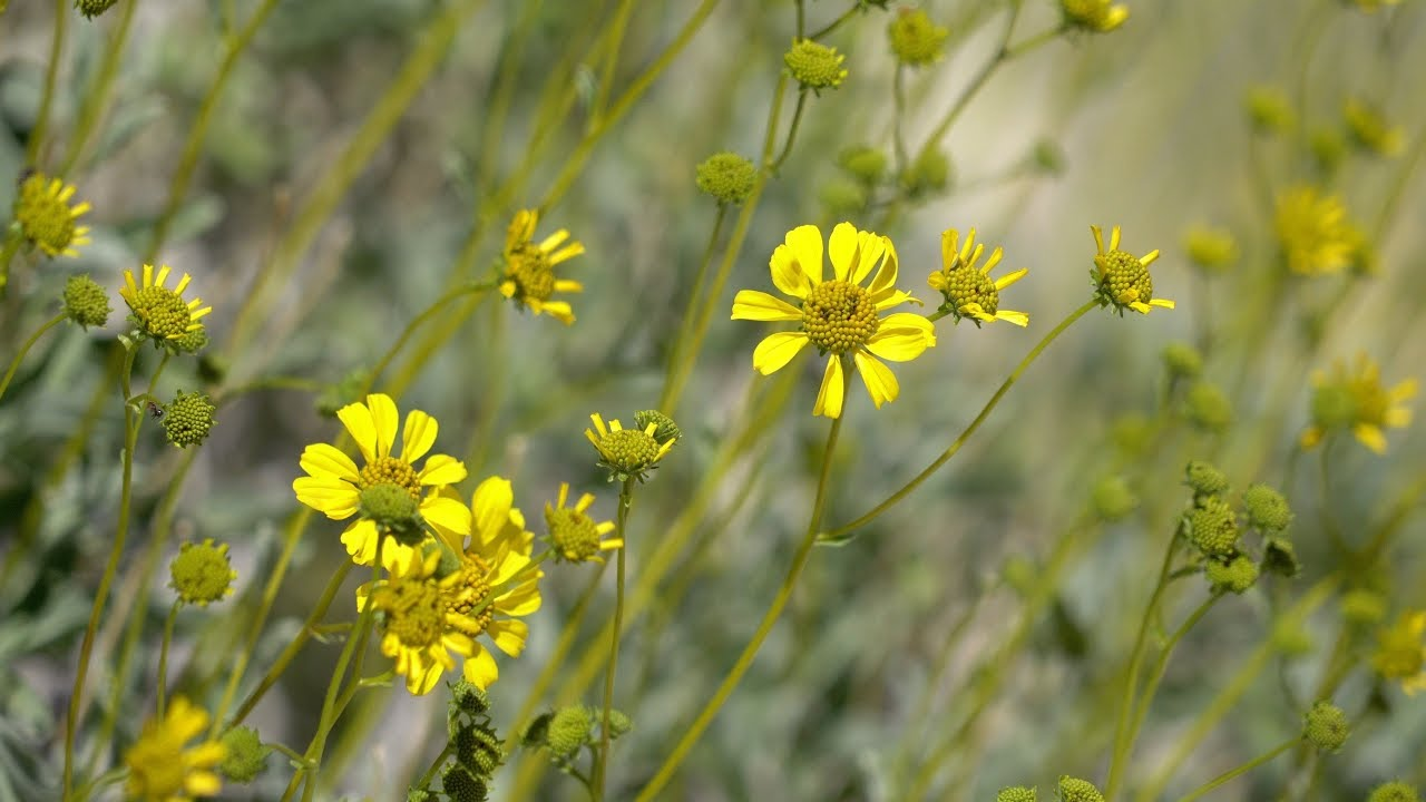 Wildflowers at Agua Caliente County Park