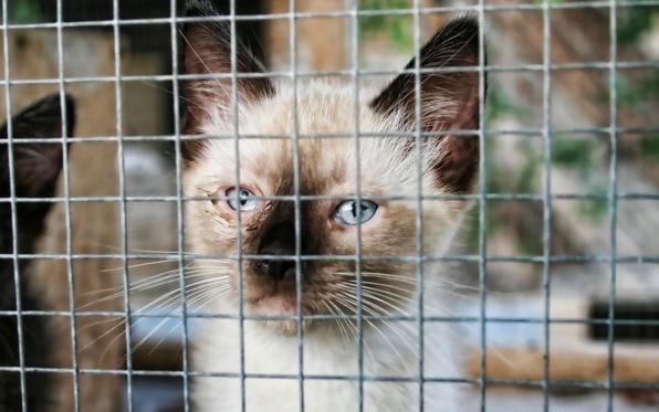 kitten-cage