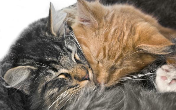 kittens-twosnuggling