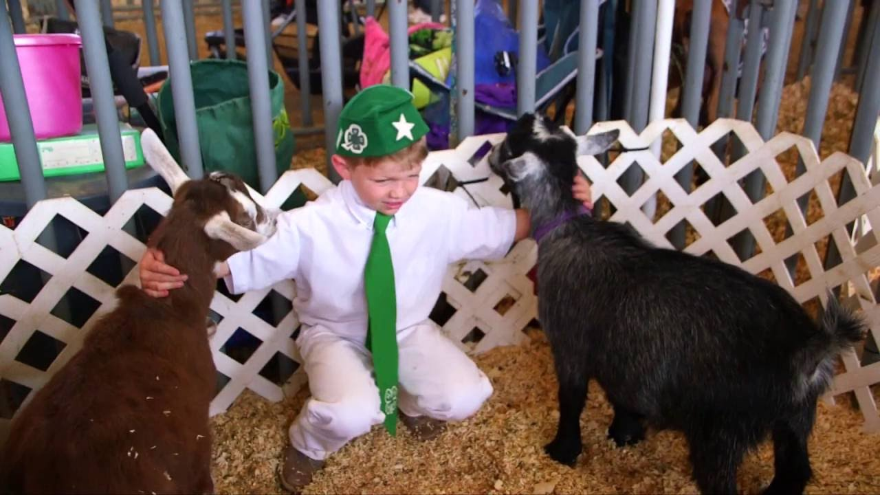 Learning Life Skills Through 4-H