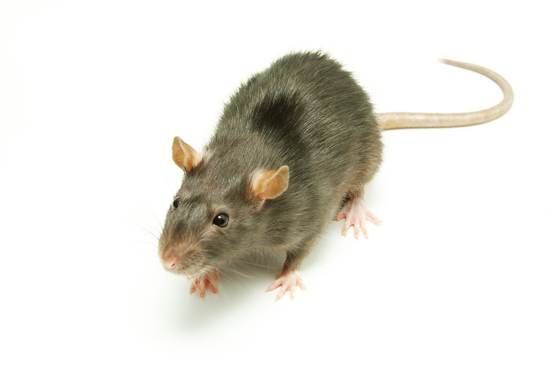 Leave Your Rodent Problem Outside