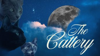 three cat faces on a graphic with the moon