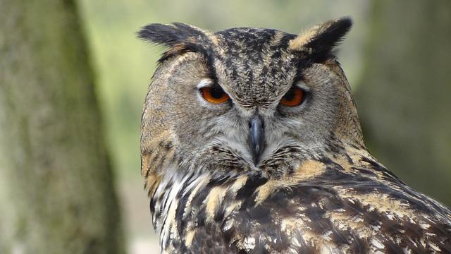 Barn Owl Buddies