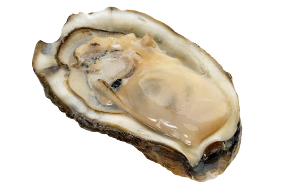 oyster-raw