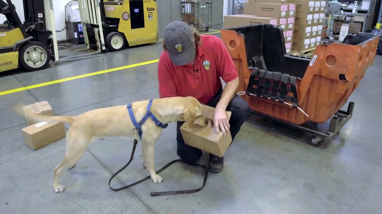 Pest Detector Works Like a Dog