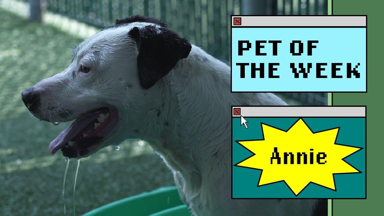 a dog in a yard