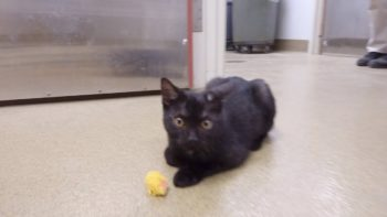 Pet of the Week – Binx