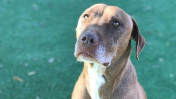 Pet of the Week – Canela