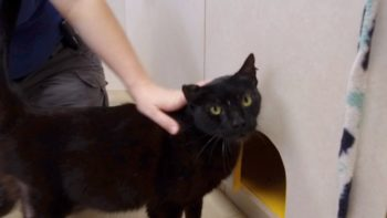 Pet of the Week – Lewis