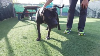 Pet of the Week – Panther
