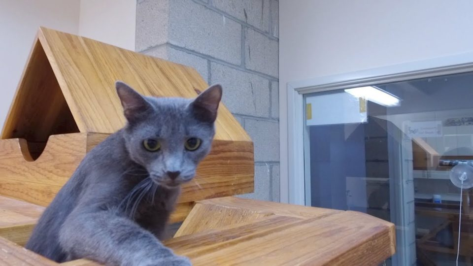Pet of the Week – Sapphire