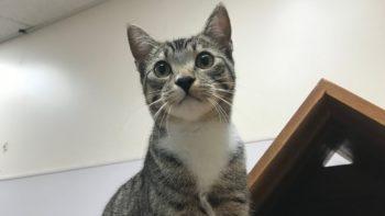 Pet of the Week – Savannah
