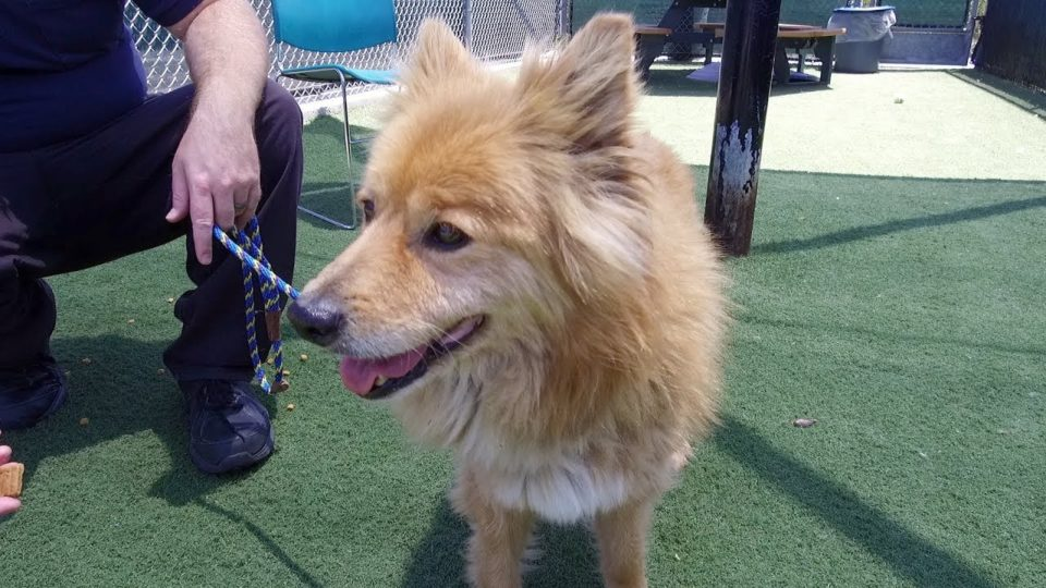 Pet of the Week – Teddy