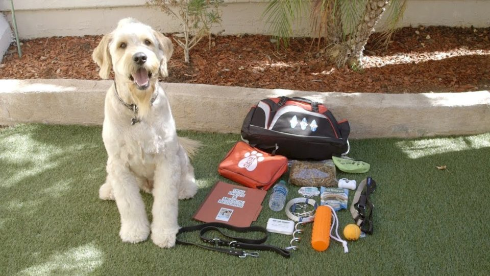 """dog sits next to his """"go-kit"""" for emergencies"""