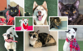 Collage of 4 dogs and 4 cats available for adoption.