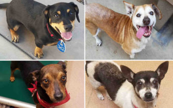 These are four of the dogs that came into County Animal shelters in the days after the Fourth of July and remain unclaimed.