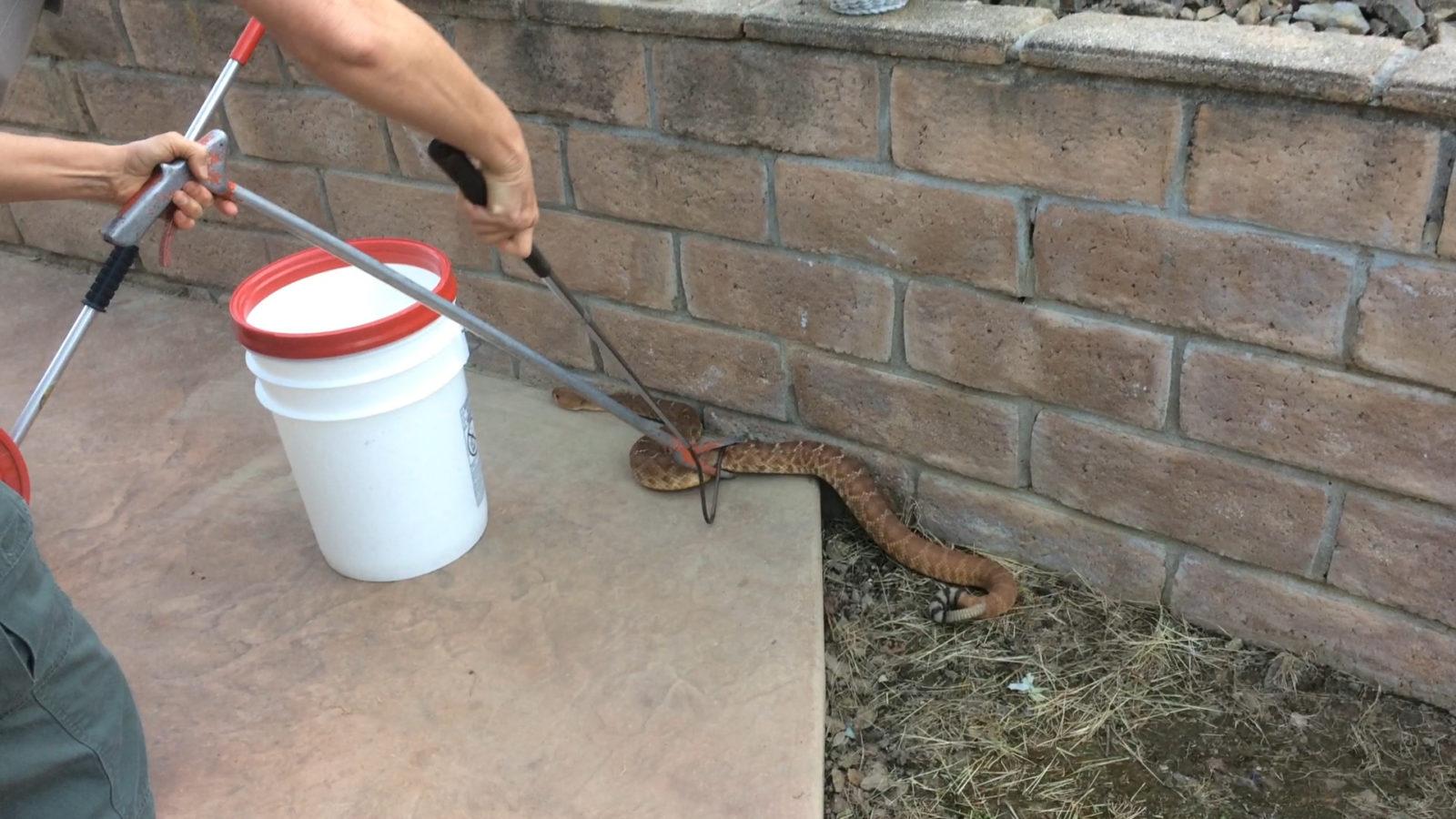 rattlesnake_RanchoPenasquitos_DAS_041317