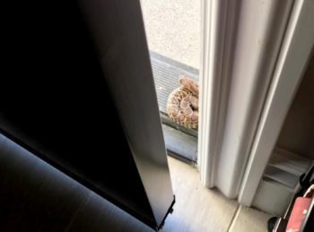 rattlesnake_doorstep