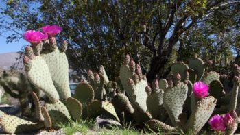 See What's Blooming at Agua Caliente Park