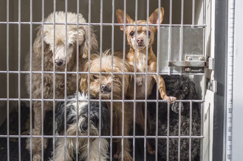 seized_dogs1_010917_1600px