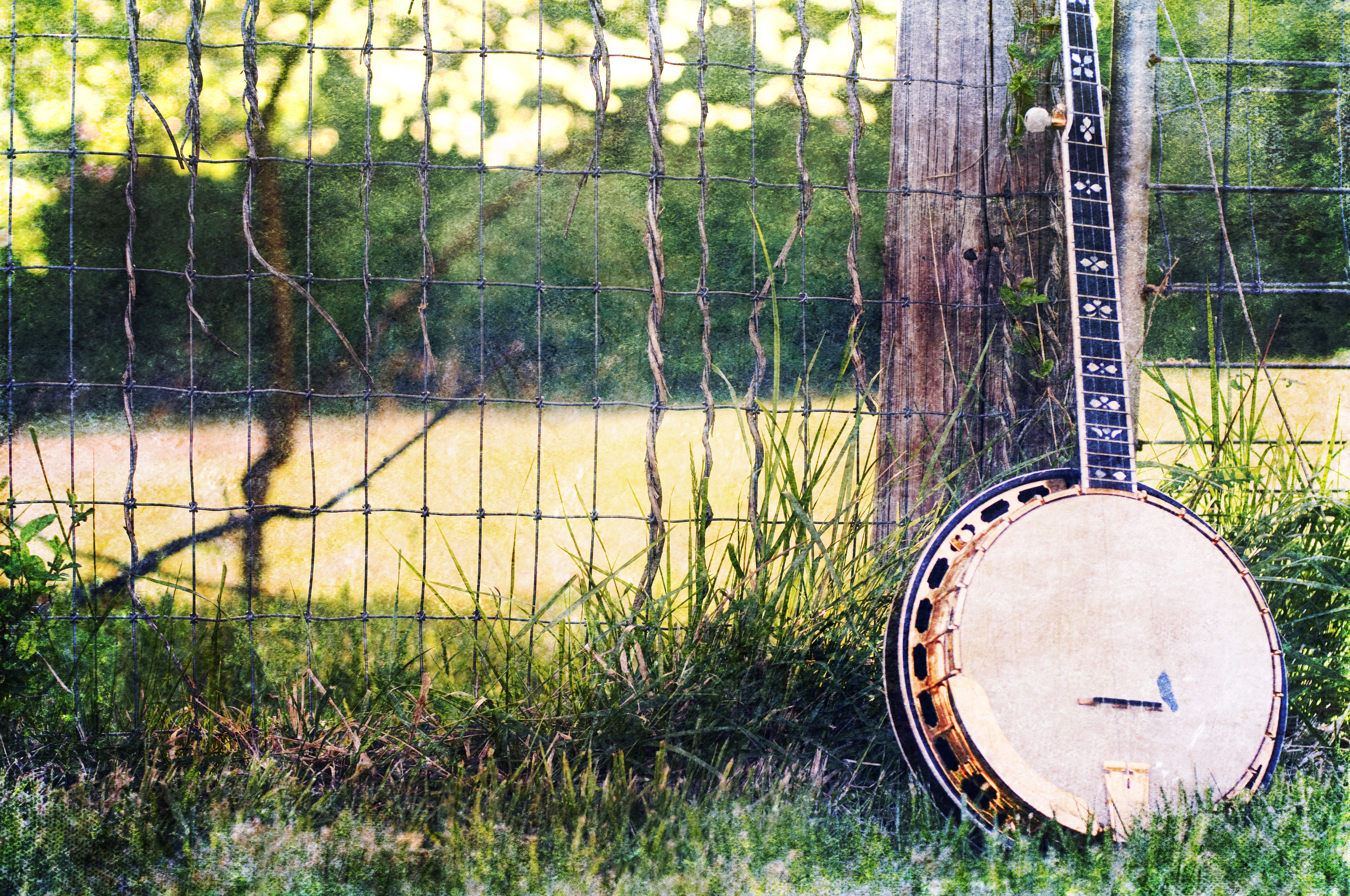 Alpine Summer Concerts in the Park: Blue Creek Band