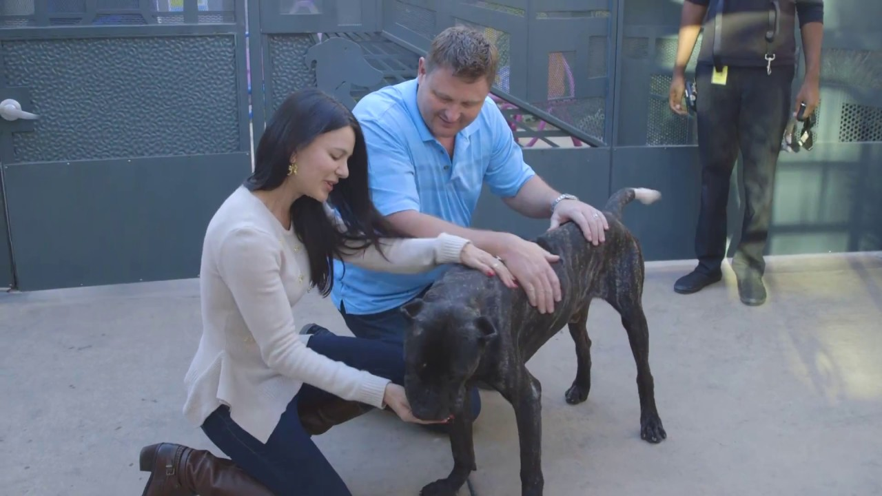Starved Dog Gets New Home in Time for Holidays