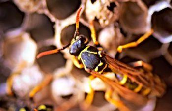 wasp photospin